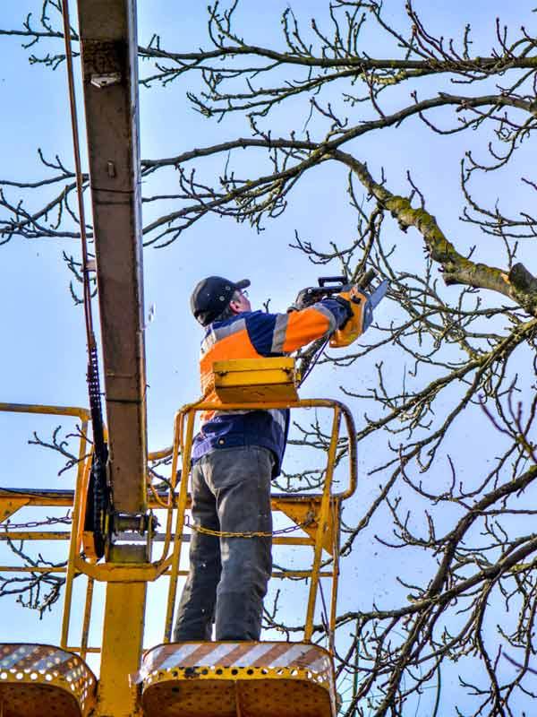 Élagage, taille des arbres, abattage d'arbres, dessouchement, débroussaillement . ELAGUEUR 77 FALLONE votre spécialiste de l'étagage en SEINE ET MARNE 77