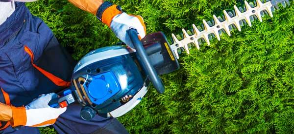 ELAGUEUR 77 FALLONE : Elagage, abattage d'arbres, débroussaillement, entretien de vos espaces verts : pelouse, taille haies et création allée de jardin. 77